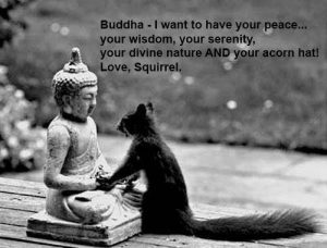 Squirrel Buddha